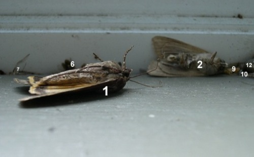 numberedmoths1.jpg